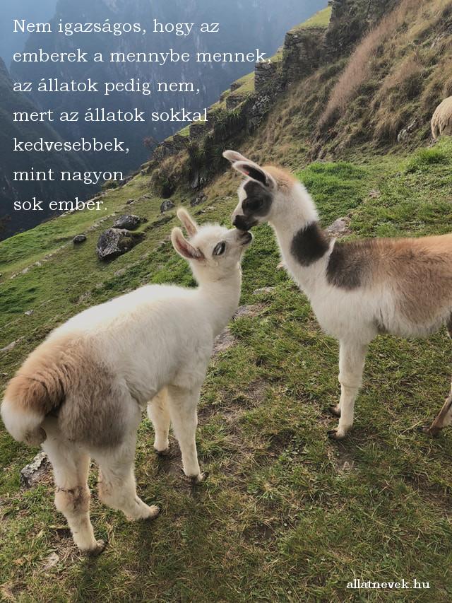 állatos idézet, mennybe megy