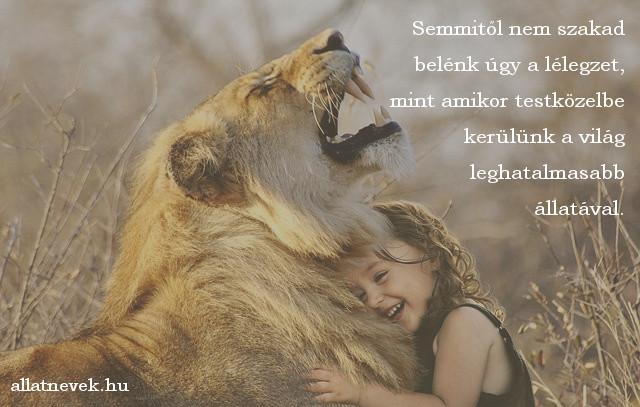 állatos idézet, oroszlán
