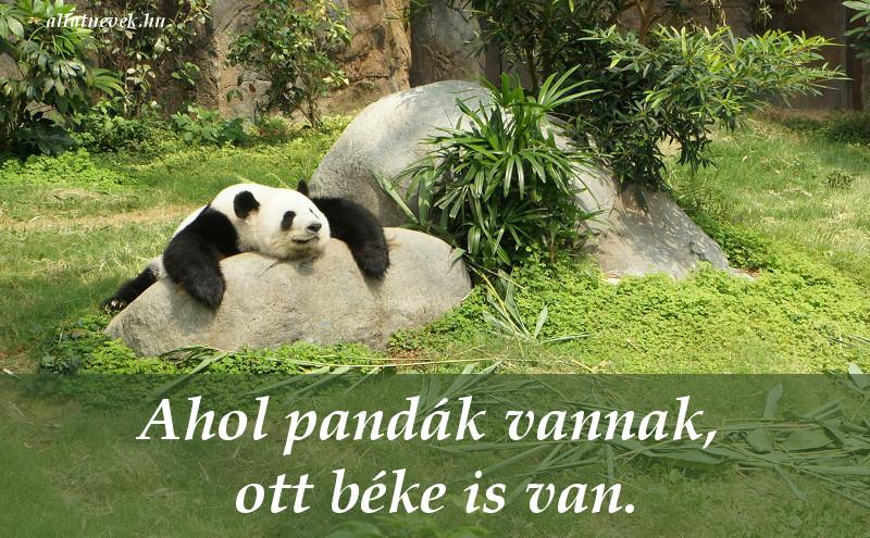 állatos idézet, panda