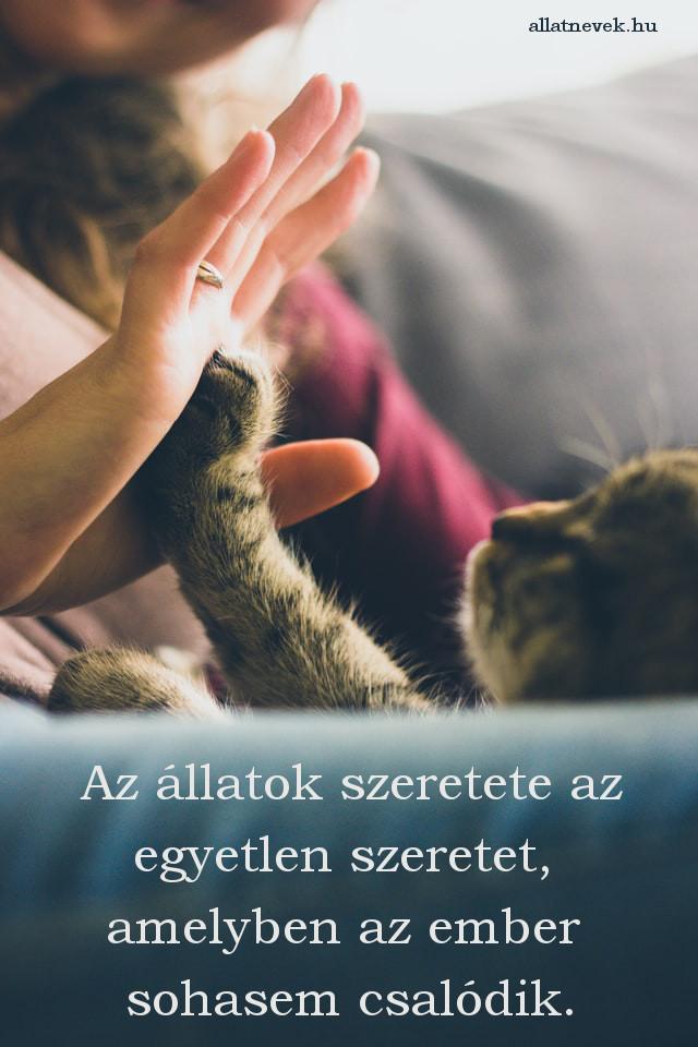 állatos idézet, szeretet, macska