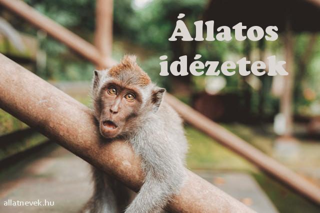 állatos idézetek, állatszeretet idézetek