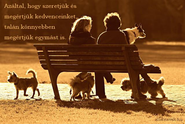 állatos idézet, megértés