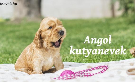angol kutyanevek