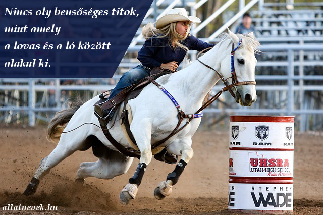 bensőséges ló lovas kapcsolat idézet