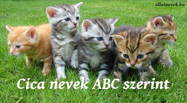 cica nevek abc szerint
