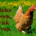 csirke nevek, tyúk nevek