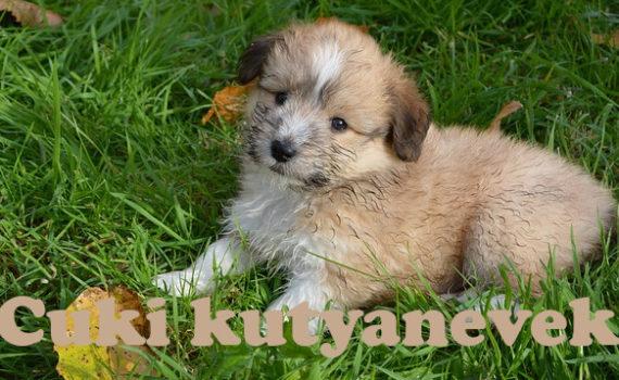 cuki kutyanevek, aranyos kutyanevek
