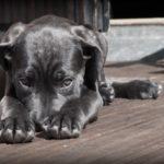 cuki szégyenlős kutyus