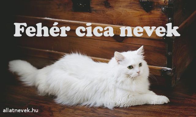 fehér cica nevek, fehér macska nevek
