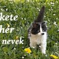 fekete fehér cica nevek
