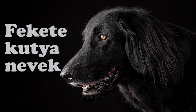 fekete kutya nevek