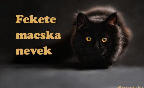 fekete macska nevek