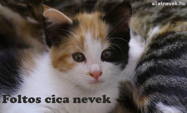 foltos cica nevek, foltos macska nevek