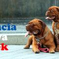 francia kutya nevek