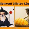 halloweeni állatos képek