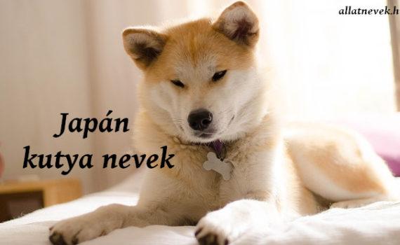 japán kutya nevek