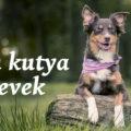 kan kutya nevek