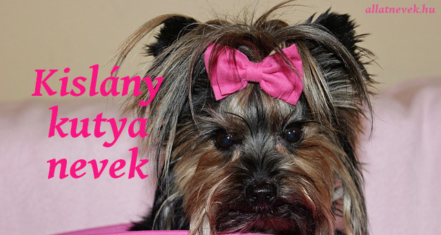 kislány kutya nevek