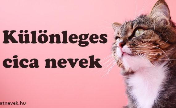 Különleges cica nevek