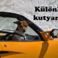 különleges kutyanevek