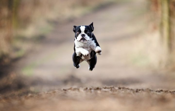 kutya fotó futás közben