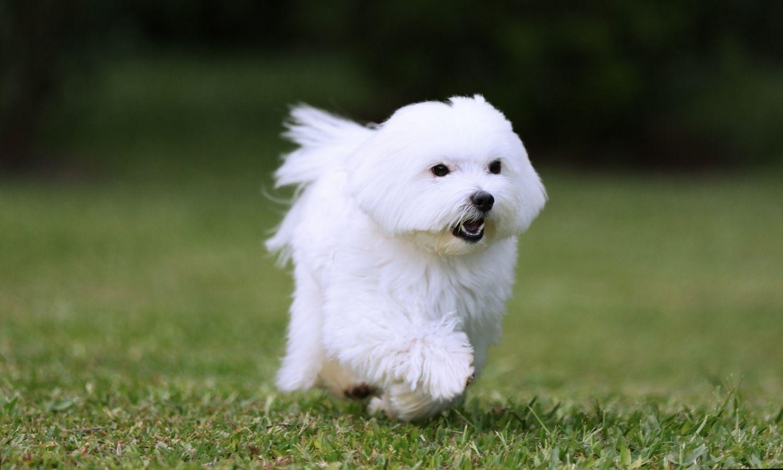 kutya fotó háttér
