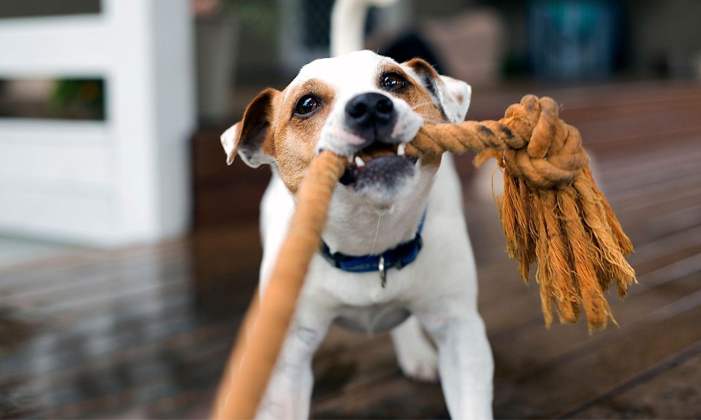 kutya fotó játék közben