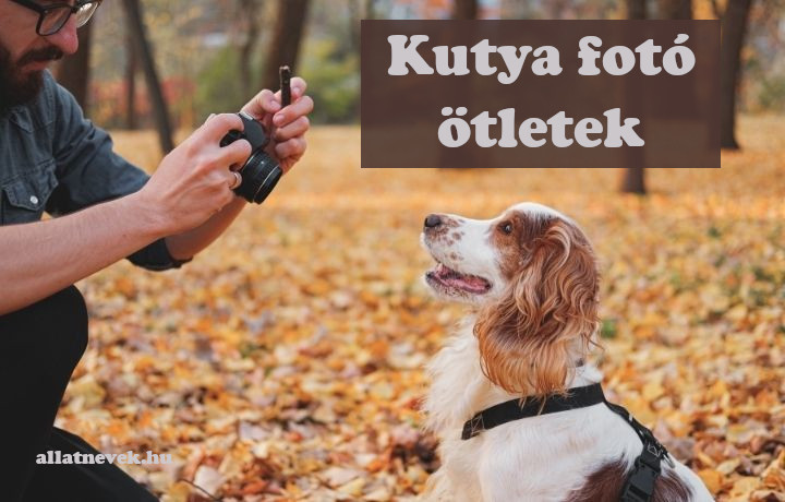 kutya fotó ötletek