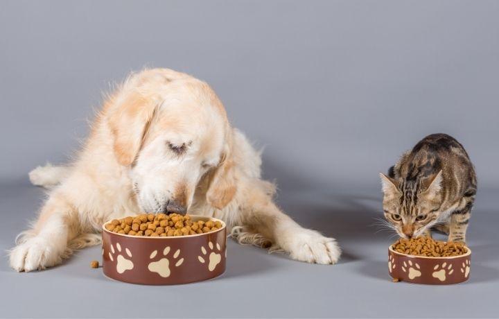 kutya macska eszik