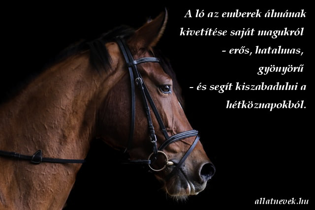 ló idézet, gyönyörű