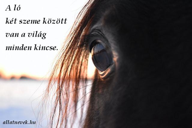 ló idézet, ló szeme között