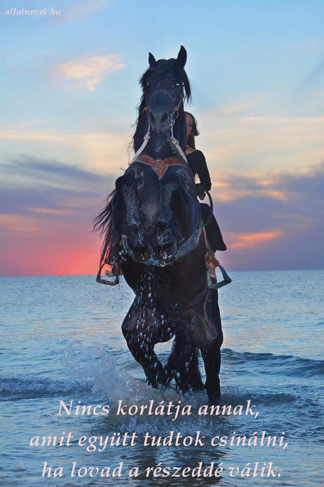 ló lovas kapcsolat idézet, nincs korlát