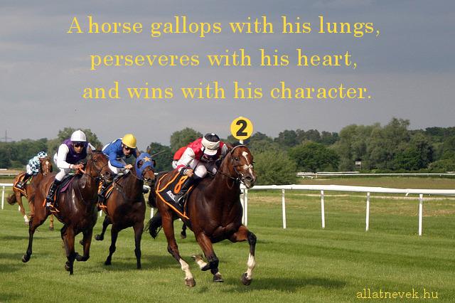 lovas idézet angolul, galop