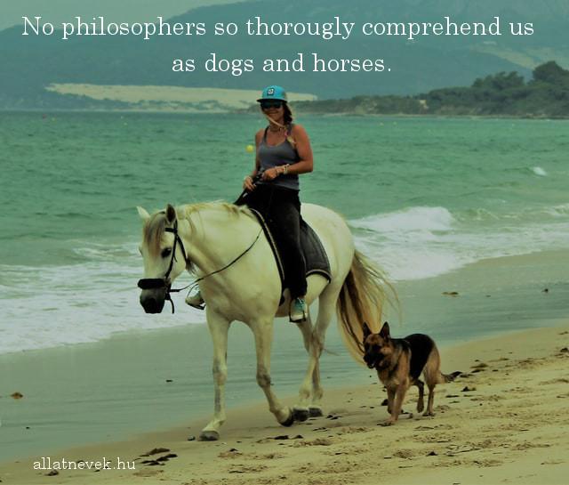 lovas idézet angolul, filozófus, ló, kutya