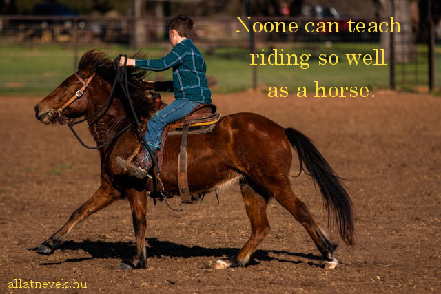 lovas idézet angolul, teaching riding