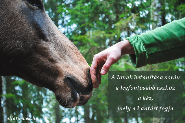 lovas idézet, lovak betanítása