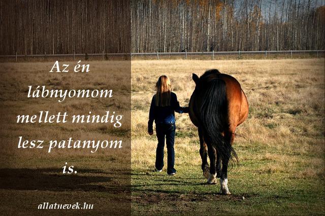 lovas idézet patanyom