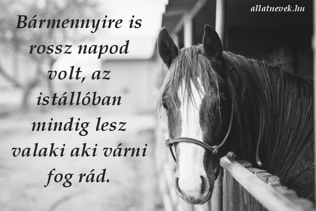 lovas idézet várni fog