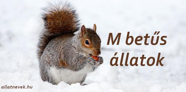 m betűs állatok