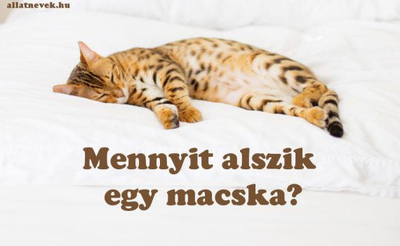 mennyit alszik egy macska