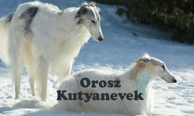 orosz kutyanevek