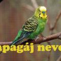 papagáj nevek
