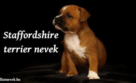 amerikai staffordshire terrier nevek