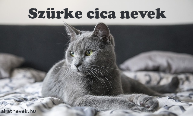 szürke cica nevek, szürke macska nevek