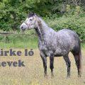 szürke ló nevek