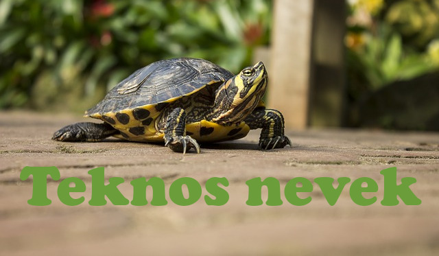 teknős nevek