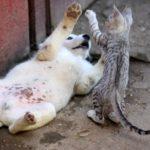 vicces kutyás kép cicával