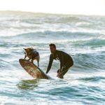 vicces kutyás kép szörf