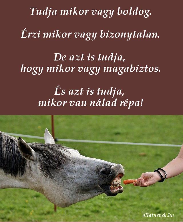 vicces lovas idézet, répa